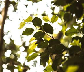 leaves *-*