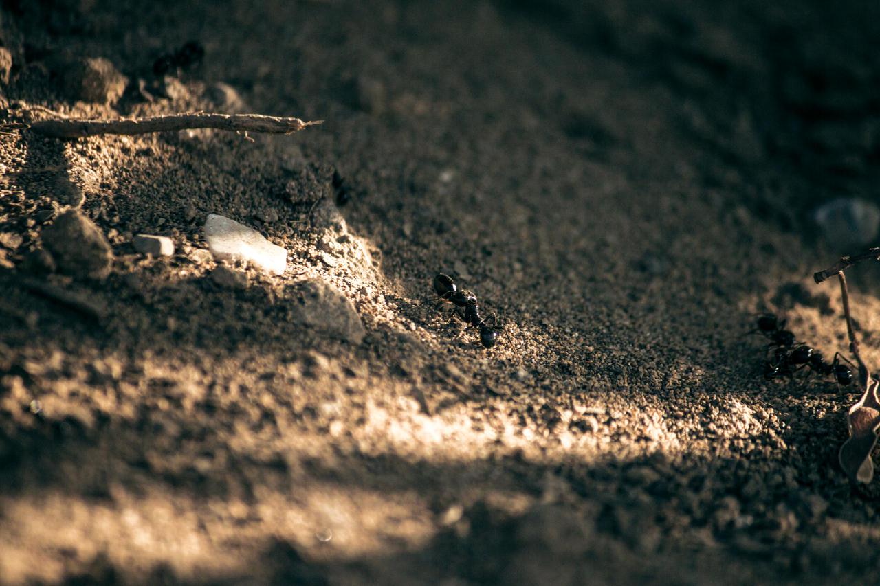 Ant's life closeup by KhaledReese