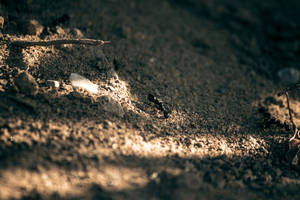 Ant's life closeup