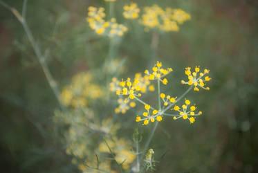 Litle flower