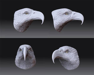 Eagle Head by swordzz