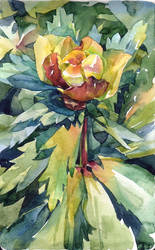 globe-flower by chernotrav