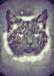 Cats with Rain