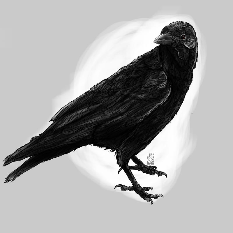 Crow by Juliansyahjude