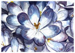 flores en acuarela, acuarelista chileno