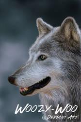 Wolf by Woozy-Woo by Woozy-Woo