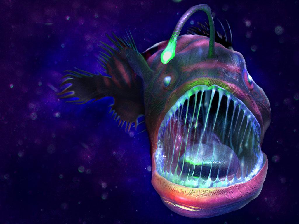 angler fish favourites by peppermintkitten on DeviantArt for Anglerfish Light  lp0lpmzq