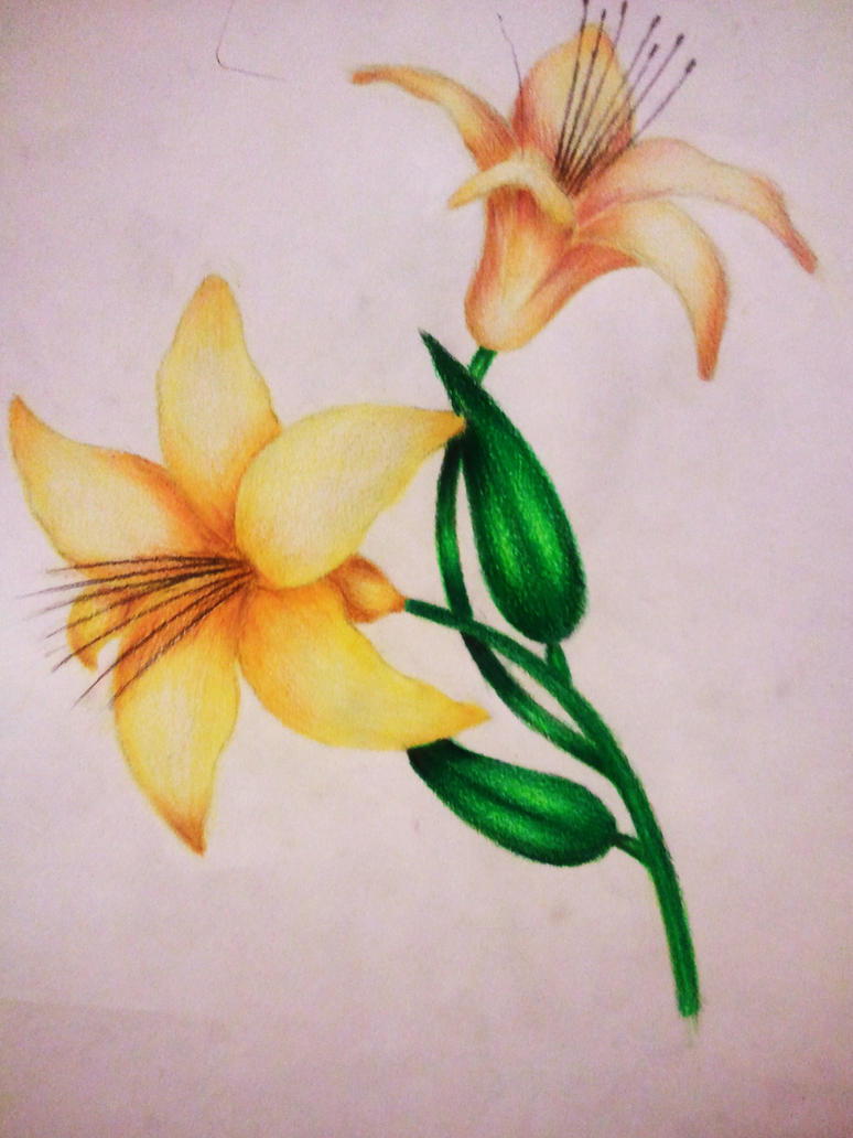 Flower Colourful drawing by xXxslipknot771xXx on DeviantArt