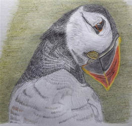 Puffin Crayon Drawing