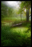 green forest 02 by Lukasszz81