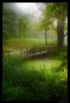 green forest 02