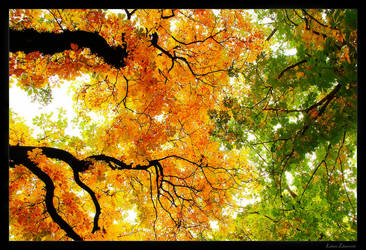 autumn is coming 02 by Lukasszz81