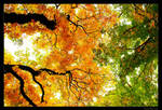 autumn is coming 02