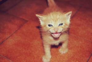 Smile by Whiteladywolf