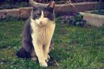 Unknow cat