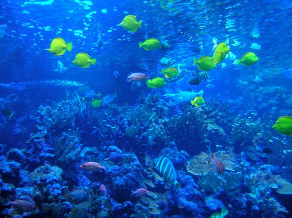 Underwater World by teen-artlover on deviantART