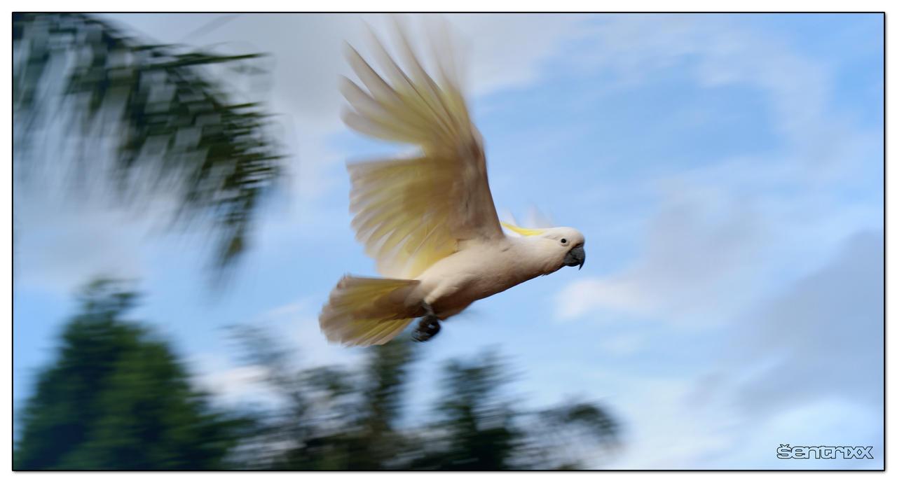 Sulphur Flight by MoleyVyrus