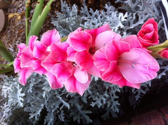 The Pink Flower by ZeitlosLotus