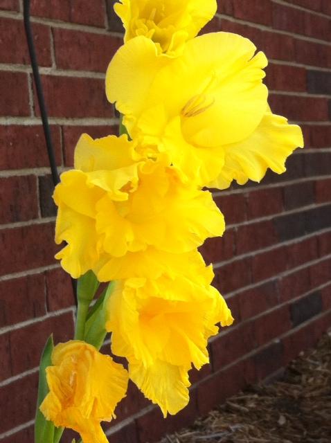 The Yellow Flower by ZeitlosLotus