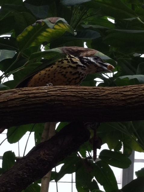 Look, look! It's a bird! by ZeitlosLotus