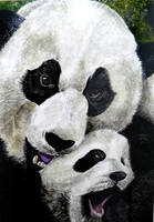 Panda by PinkedIn
