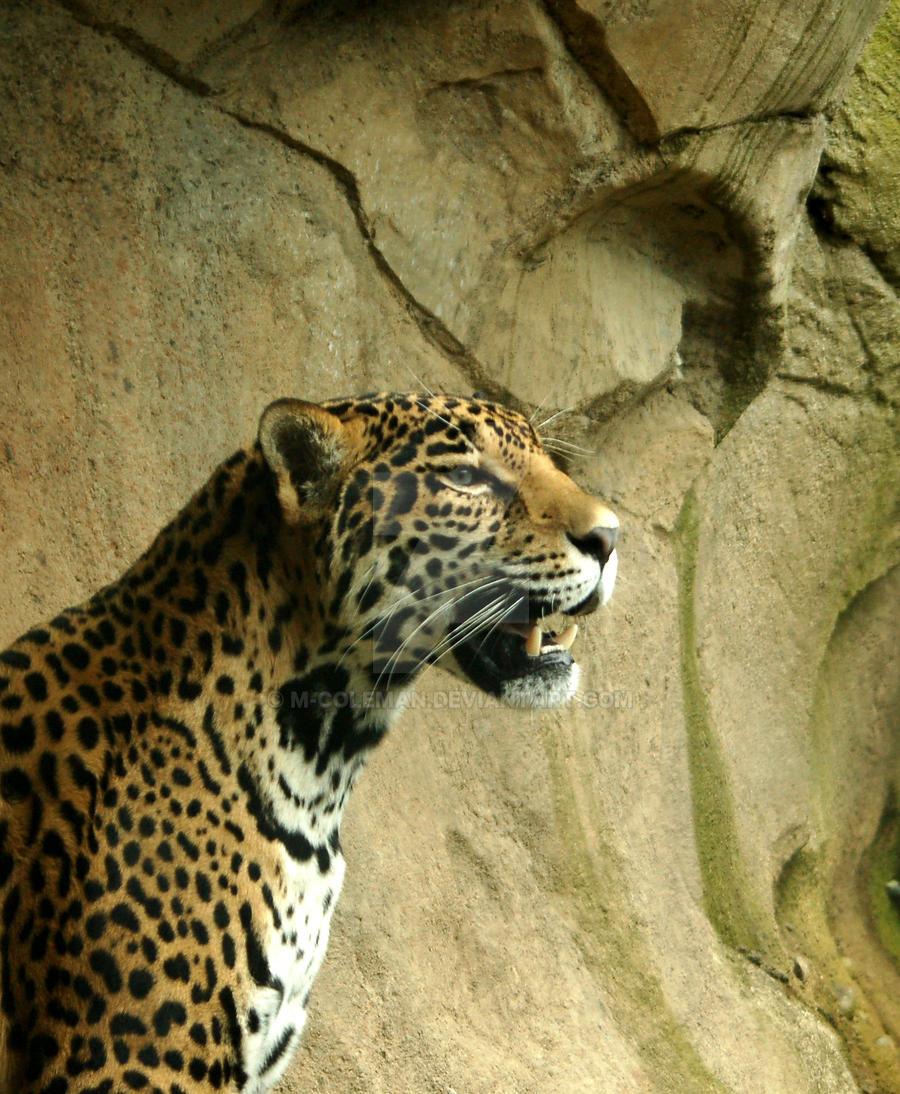 Leopard by M-Coleman