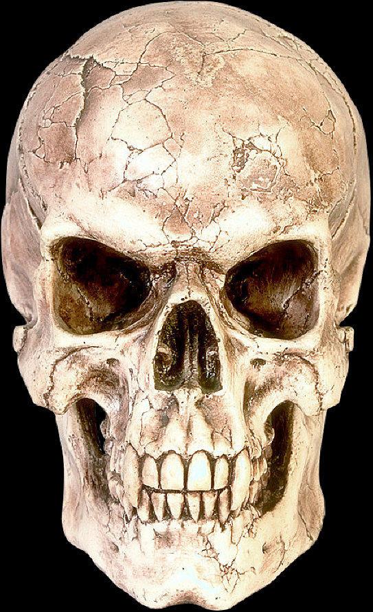 skull by PunknrollStock