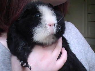 Peachie chubby cheeks :3 by PrincessPeach4eva
