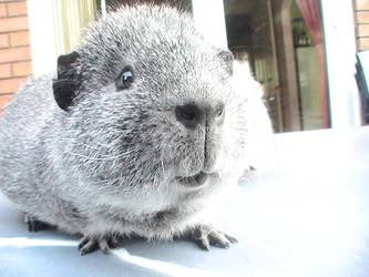 Handsome little chappy by PrincessPeach4eva