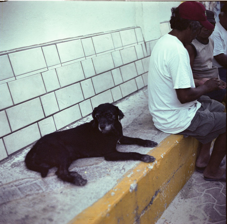 Perro by ImJustDEO
