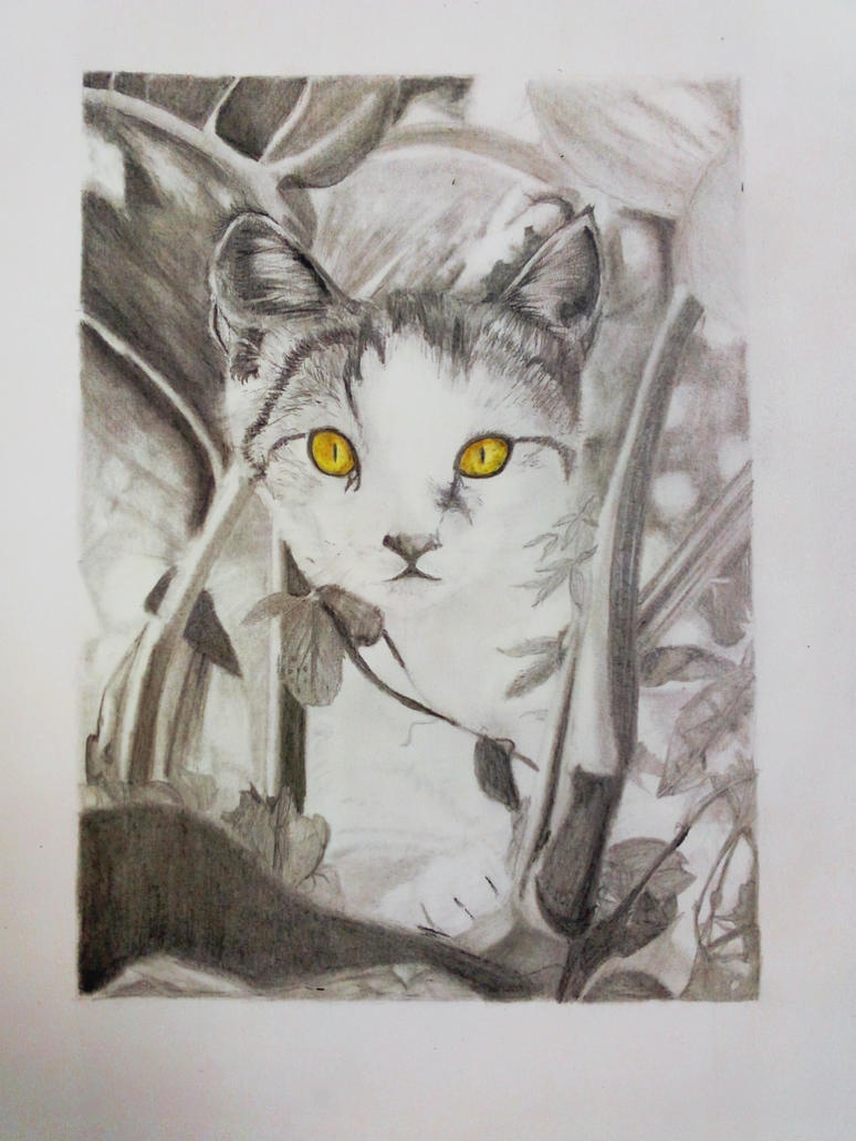 Cat with the uneven eyes by efyri