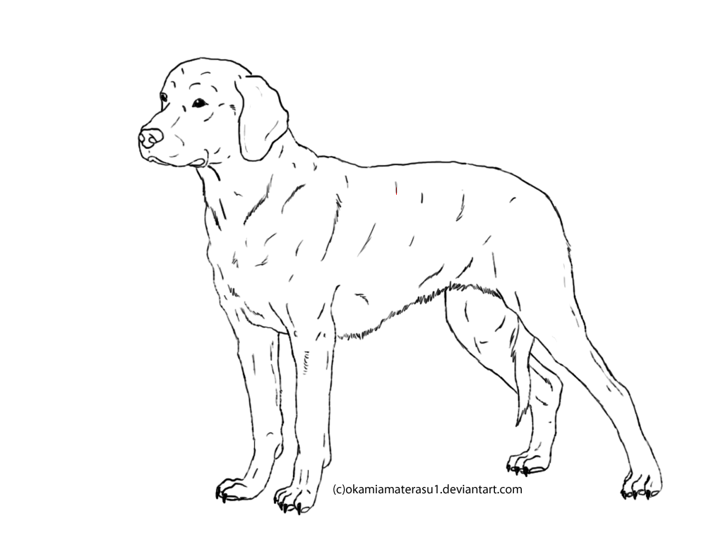 Coloring picture of a dog search results calendar 2015 for Great dane coloring pages