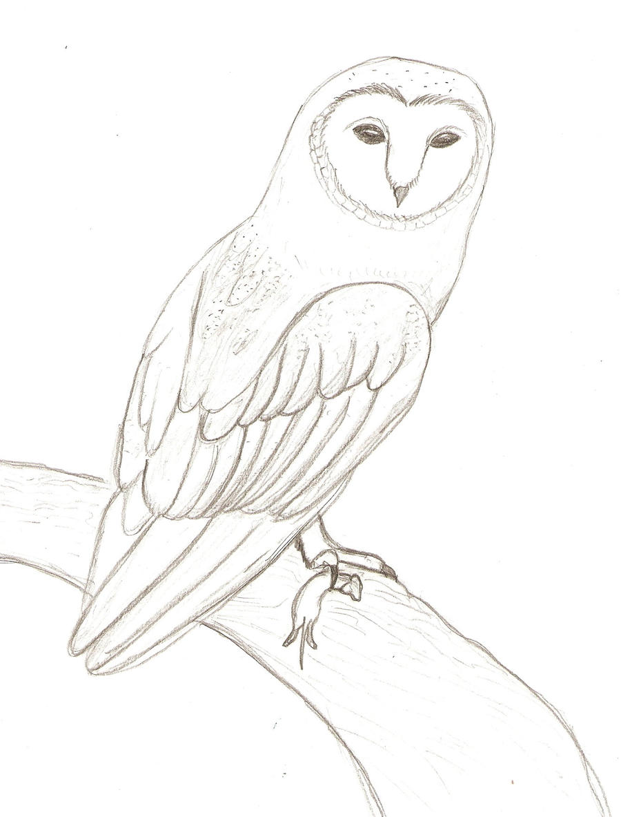 Barn owl with mouse by natefana98 on deviantart for Barn owl coloring pages