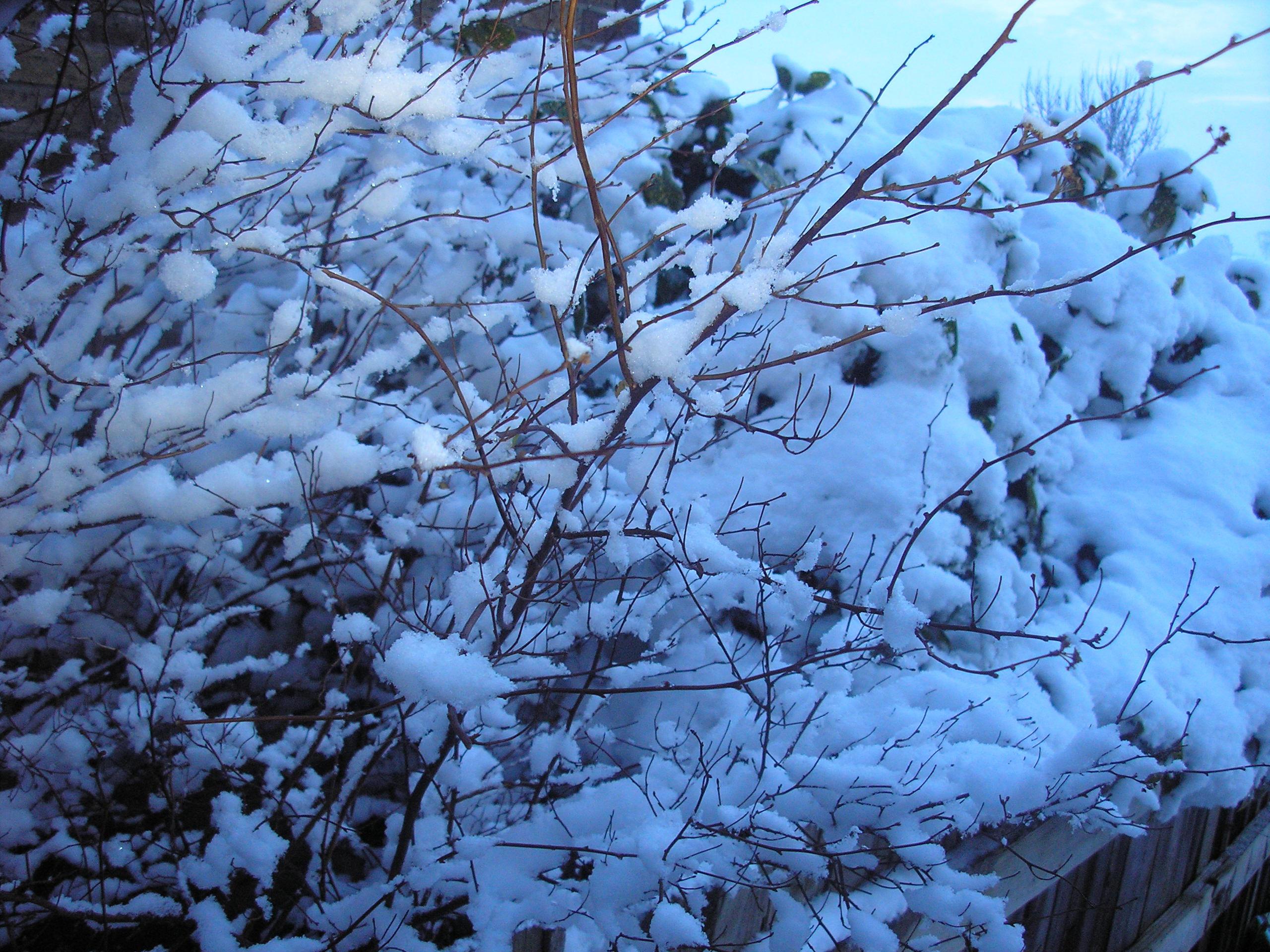 Frosty bush by StivStock