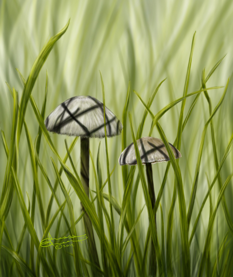Mushrooms in grass by wl551