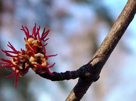 Verge of Spring by wl551