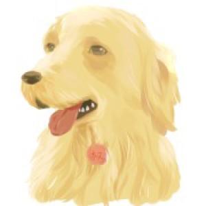 SeraphimQ's Profile Picture