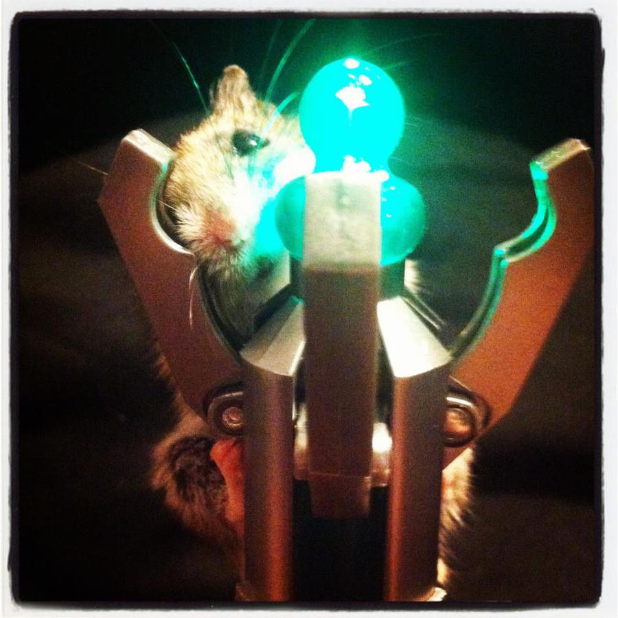 Gizmo and Sonic Screwdriver by PanheadBrittany