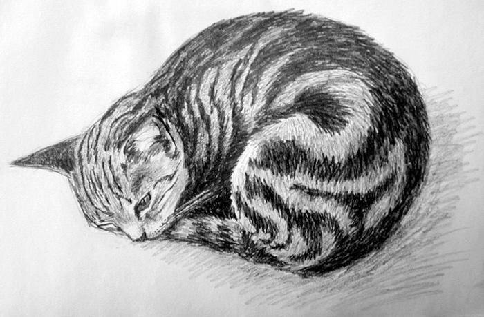 cat nose dry