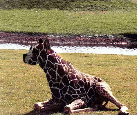 Hybrid animal by henkrygg