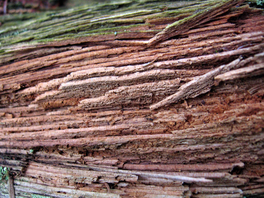 rotting wood 1 by kayas-stock