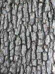 bark stock 5