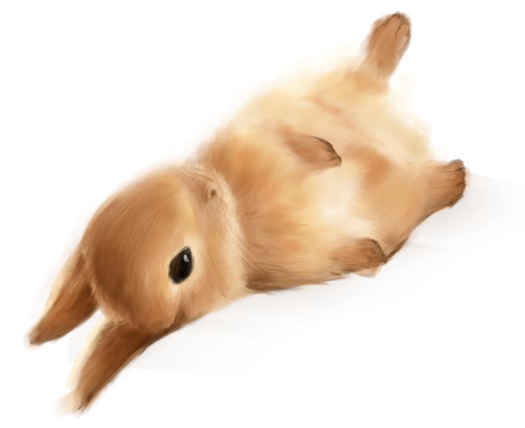 Rabbit by destizeph