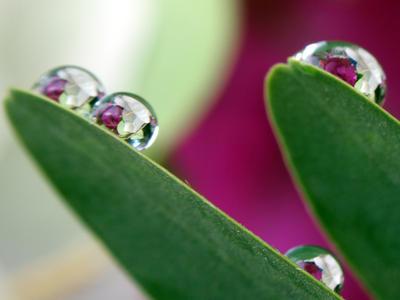 Droplet 3.
