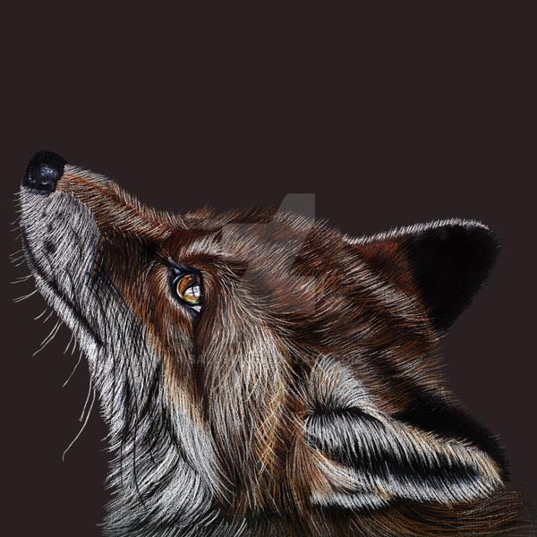 Fox by Balu90