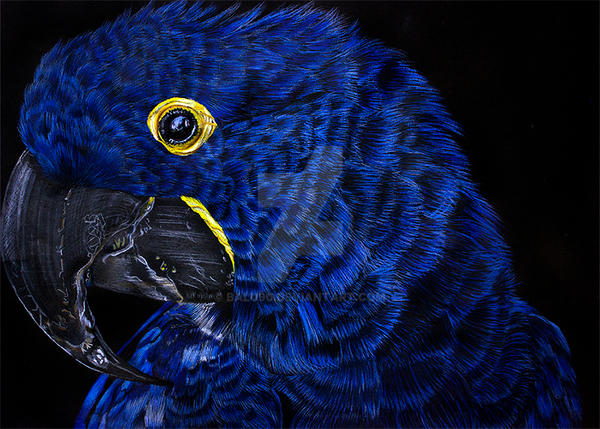 Hyacinth macaw by Balu90