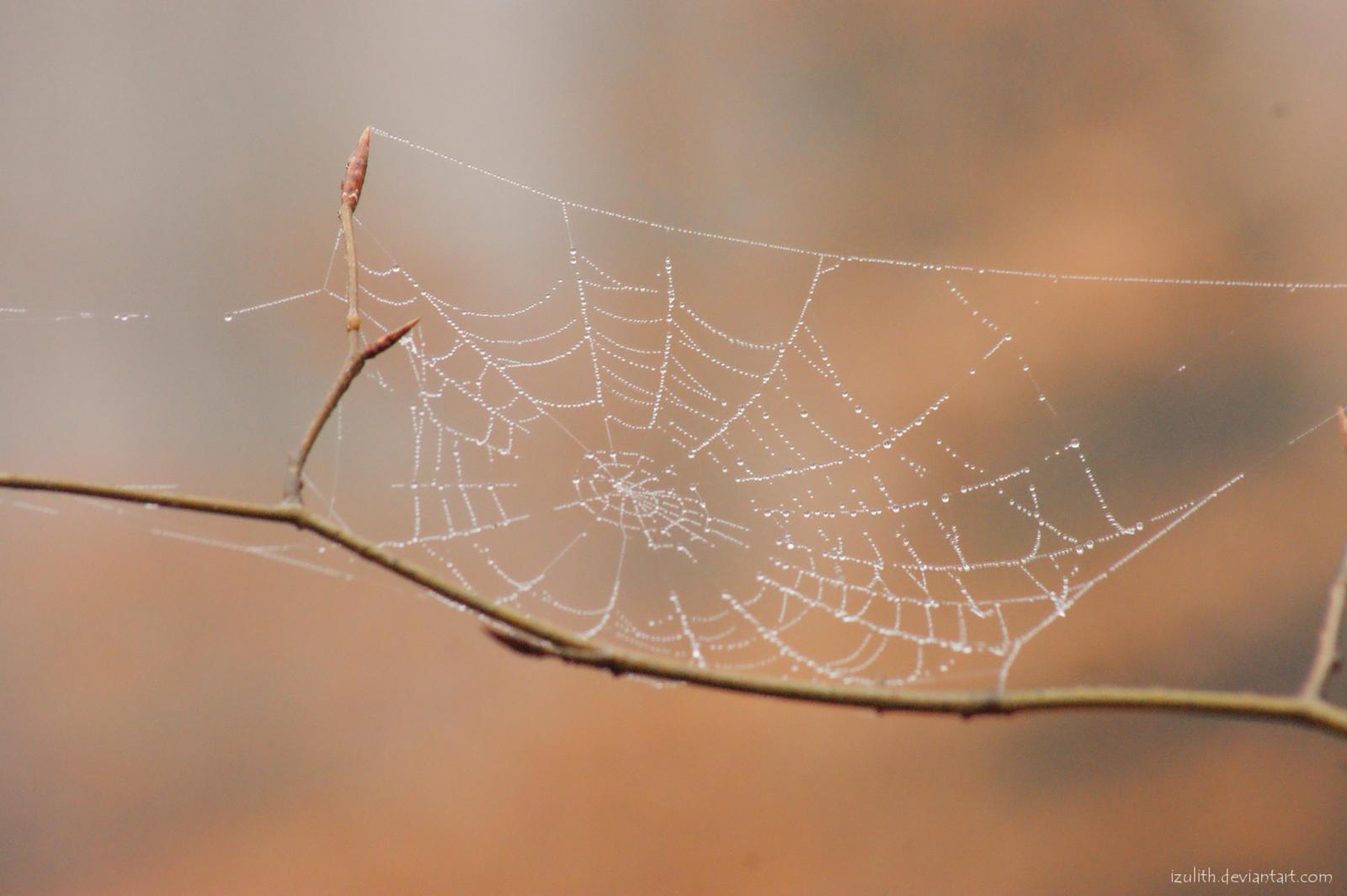 Cobweb by Izulith