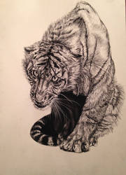 Tiger draft