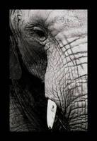 Elephant by spoonally-intruded