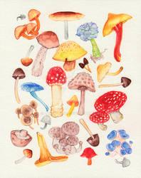 Mushrooms and 1 Succulent